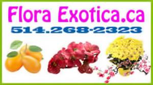 Flora Exotica